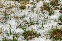 Grass after hailstorm Stock Images
