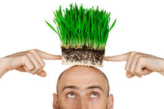 Grass hair Stock Images