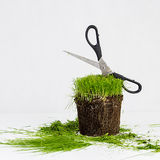 Grass haircut Stock Images