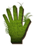 Grass hand. Hand where the grass is growing Stock Images