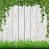 Grass and hanging ivy on white wooden planks background. Royalty Free Stock Photography