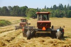 Grass Hay Stock Image