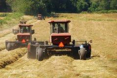Grass Hay Stock Photos