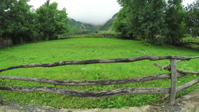 Grass for hay stock footage