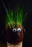Grass on the head. Planting grass everywere even on the head stock images