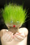 Grass head toy Royalty Free Stock Photography