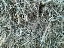Dry grass heap Stock Images