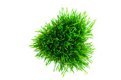 Grass heart Stock Photo