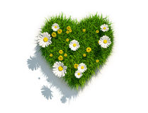 Grass heart on white background. 3d grass heart on white background with daisies and dandelions Royalty Free Stock Images