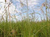 Grass and herbs background Royalty Free Stock Photography