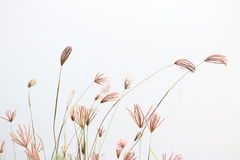 Grass. In high key background royalty free stock photos