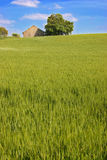 Grass hill. With house on top Stock Image