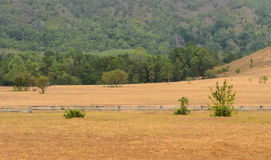Grass Hill or Bald Hill in Thailand Royalty Free Stock Photography