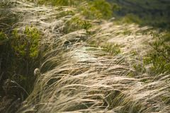 Grass on the hill Stock Photos