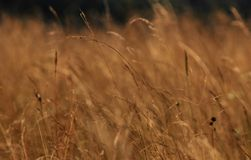 Grass on hill Royalty Free Stock Photography