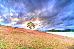 Grass hill and pine tree dawn with colorful rays light shine into sky. It`s great to see here. The combination pink tone grass create amazing things in nature stock photo