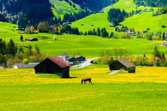 Grass hill and Swiss  farm, near Montreux, Switzerland Royalty Free Stock Images