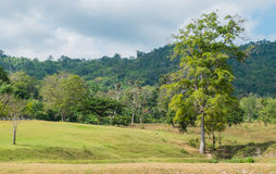 The grass on the hill. In thailand Royalty Free Stock Photos