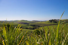 Grass and hills Stock Image