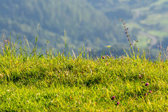 Grass on hillside edge. Green grass on hillside edge on blurresd background of mountain in summer Royalty Free Stock Images