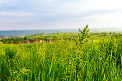 Grass on hilly landscape Stock Images