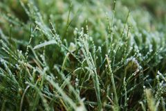 Grass hoarfrost Royalty Free Stock Image