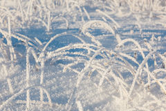 Grass with hoarfrost Royalty Free Stock Images