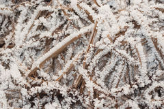 Grass in hoarfrost. Texture, photo took in Moscow, Russian Royalty Free Stock Photo