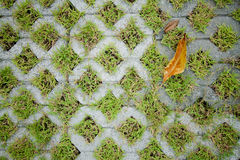 Grass in the holes of brick pattern Stock Image