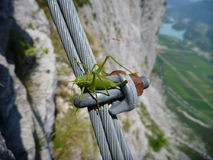 Grass hopper at the steel fixed rope for via ferrata Royalty Free Stock Images