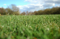 Grass Horizon Stock Photo