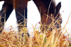 Grass and a horse Stock Images