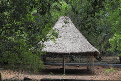 Grass hut in forest Royalty Free Stock Photography