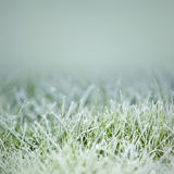 Grass on ice Stock Photo