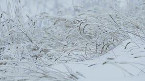 Grass ice beautiful snow frozen winter pretty stock video footage