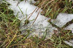 Grass and ice royalty free stock photos