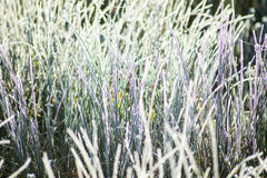 Grass with ice crystals Royalty Free Stock Photos