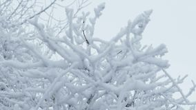 Grass in ice frozen winter nature snow landscape beautiful stock video footage