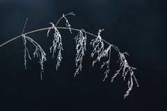Grass in the ice stock photography
