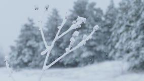Grass ice snow frozen winter pretty stock video