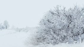 Grass ice snow winter pretty frozen stock footage