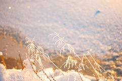 Grass and ice, winter background, wallpaper Stock Image