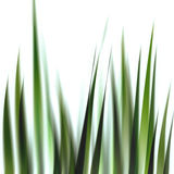 Grass illustration - 2 Royalty Free Stock Photography