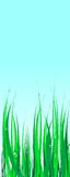 Grass illustration Royalty Free Stock Photo