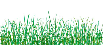 Grass illustration Stock Photo