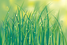 Grass - Illustration Stock Photography