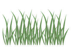 Grass, illustration Stock Photo