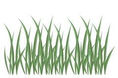 Grass, illustration Stock Photo