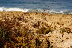 Grass In Sand Dunes In Sea Stock Photography