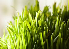Grass indoors Royalty Free Stock Image